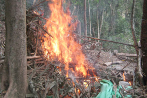 NSCN (IM) temporary camp busted