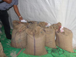 """This photograph issued by a local youth group from Mokokchung on Thursday said """"infested sacks of rice"""", as seen in the image, meant for use as a midday meal for school children were destroyed. On April 28, bags of 'unsafe rice' were disposed off, according to youth organization Mokokchung Town Lanur Telongjem."""
