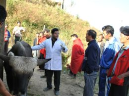 File photo of ICAR - National Research on Mithun (NRCM), Jharnapani, official interacting with the village functionaries during one of the veterinary aid camps.