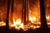 Spurt in forest fires in Manipur